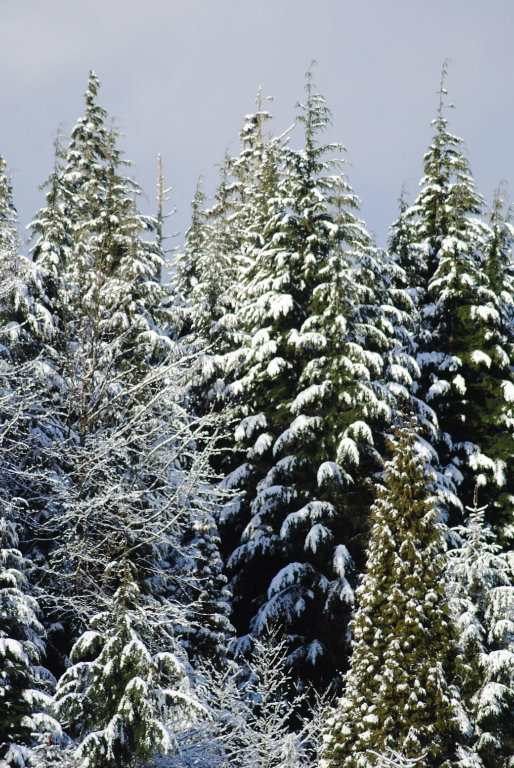 Glorious snow!