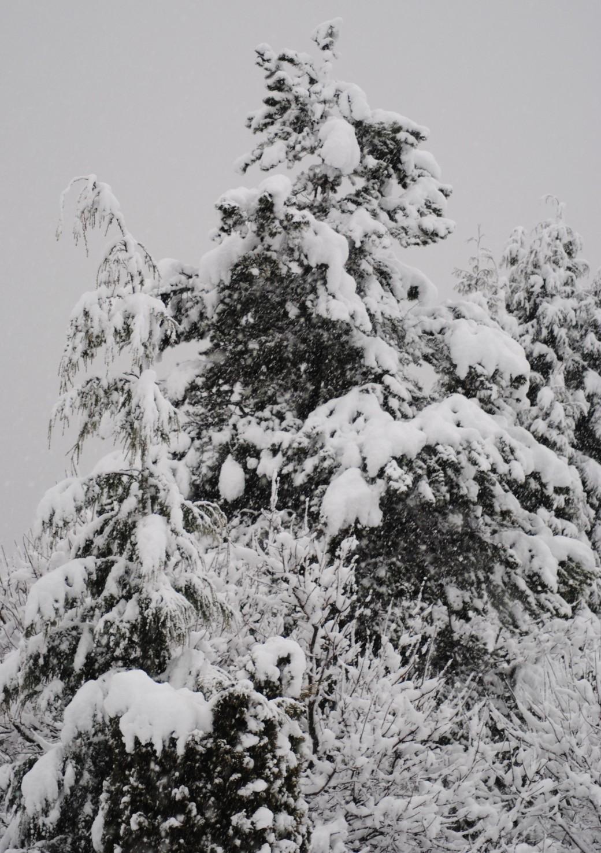 Yup, it sure did snow last night!