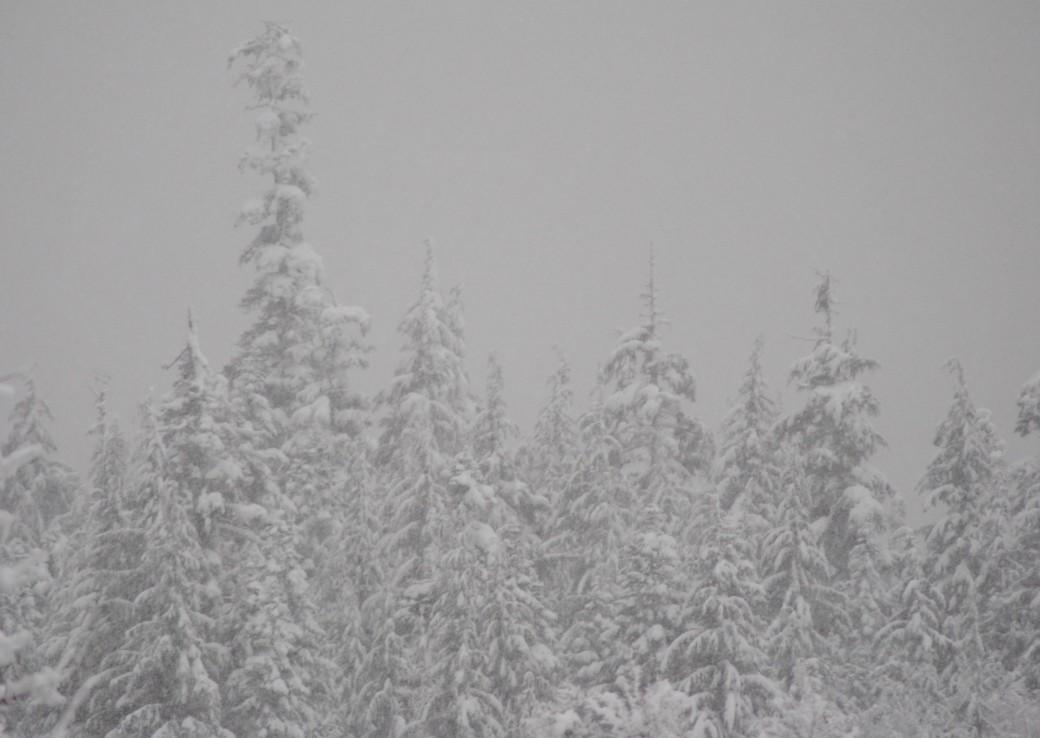 Snow, snow glorious snow!
