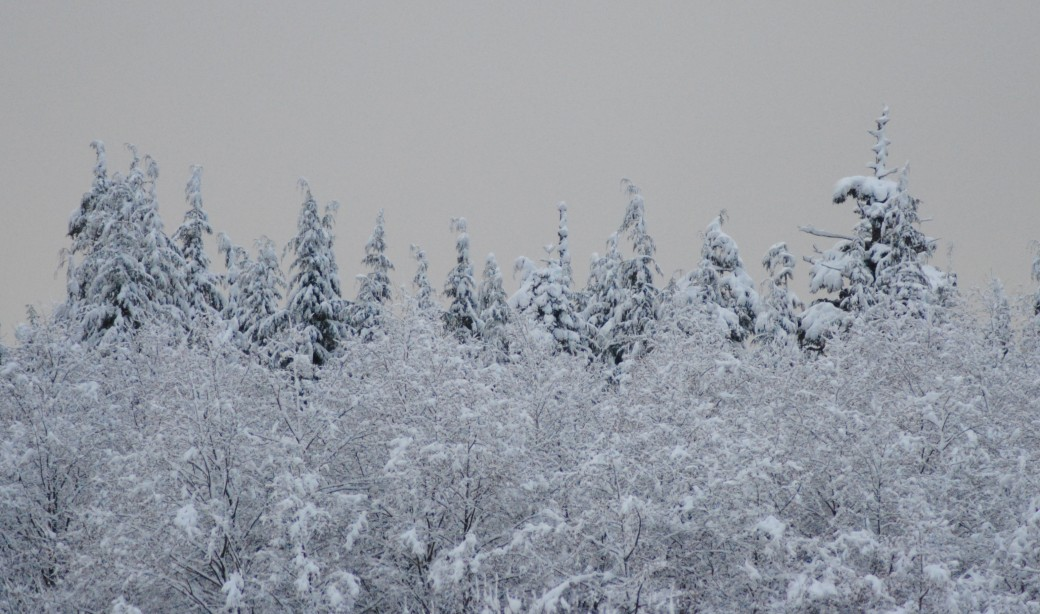 I love the landscape after a snowfall!
