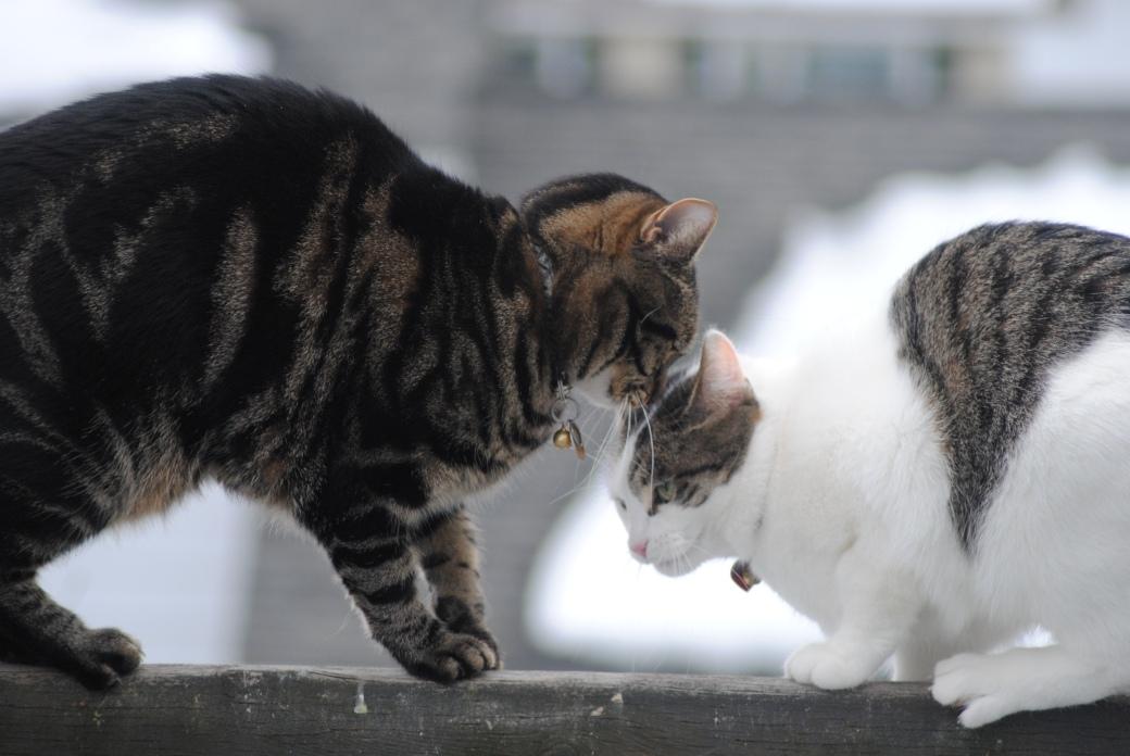 Cat cuddles on the edge!