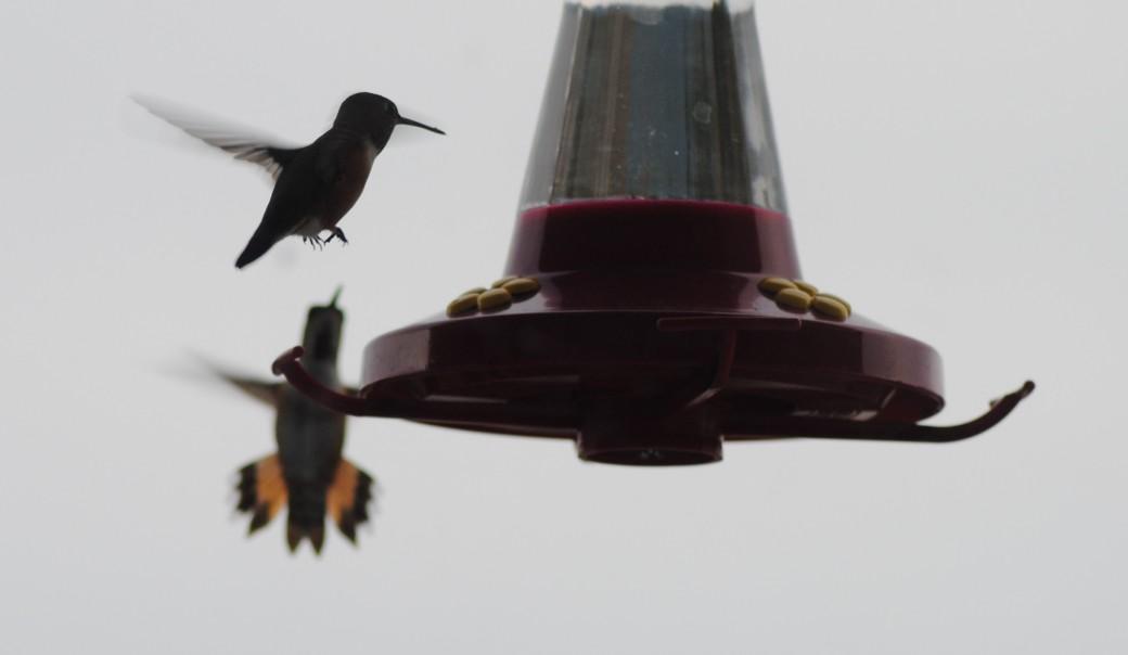 Love the Hummingbirds!