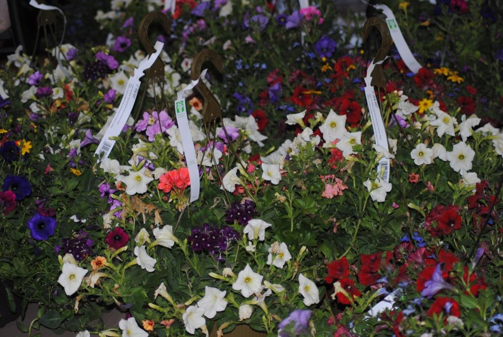 An abundance of Flowers!