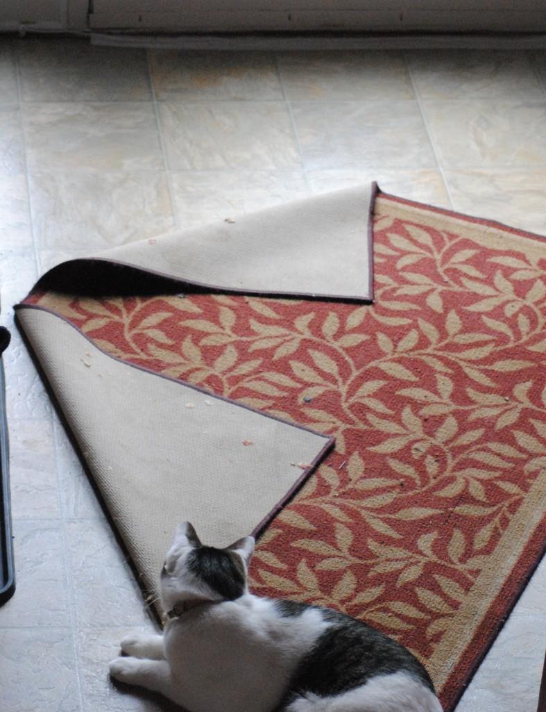 The cranky cat sat on the mat!