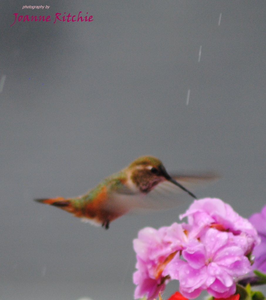 Hummingbird and Raindrops