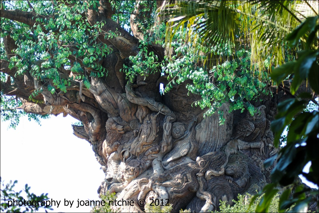 Animal Kingdom - Animal Tree