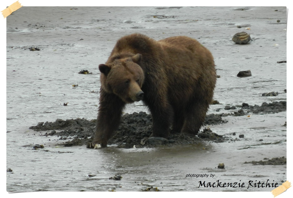 Bear watching of Prince Rupert