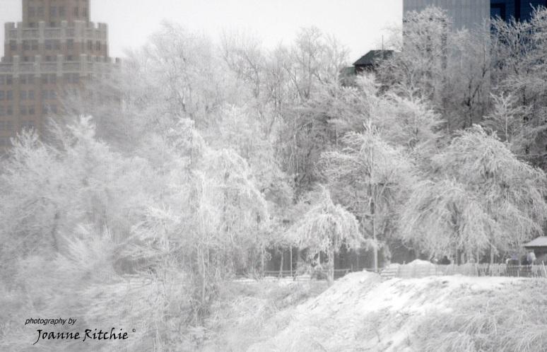 Frozen Mist makes a wonderful picture