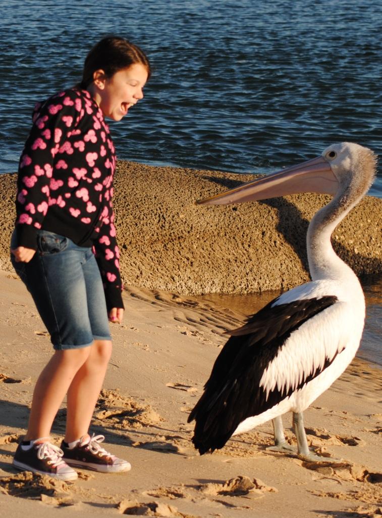 Gettin down wih a Pelican