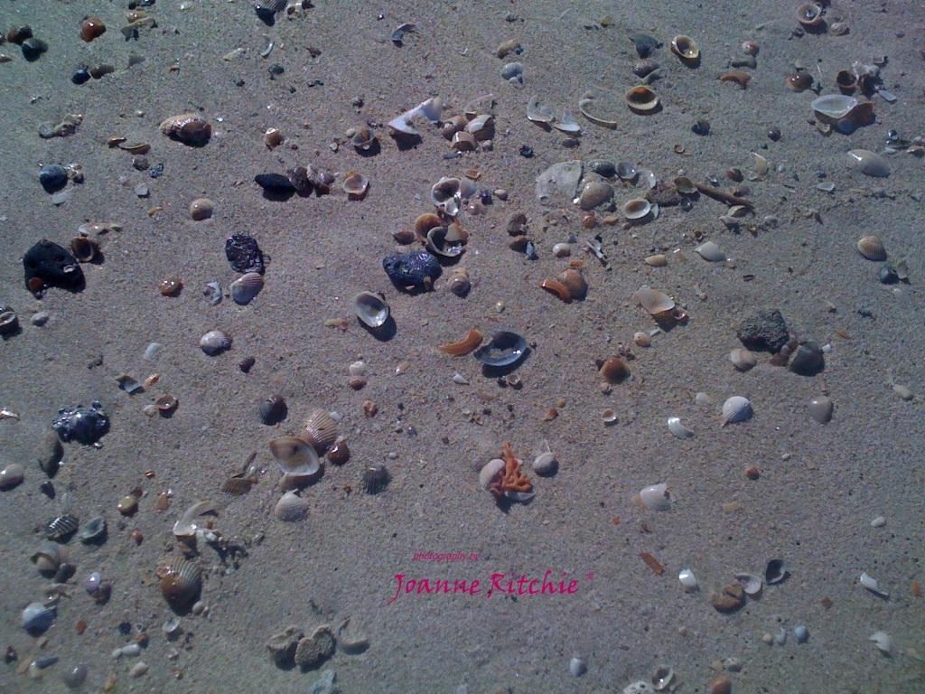 She saw sea shells by the sea shore