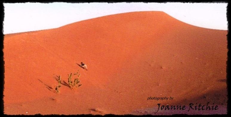 HLR climbing the Sahara