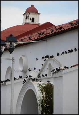 Church and pigeons