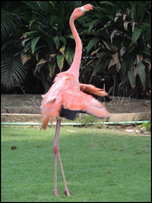Dancing Flamingo
