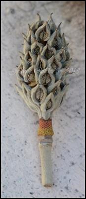 Extraordinary Seed Pod