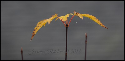 Last leaf of the year!!!