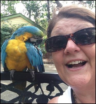 Macawl selfies