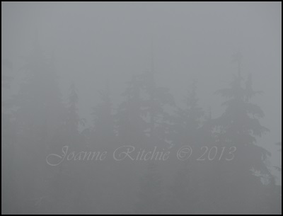 Misty Mornings - I love them!