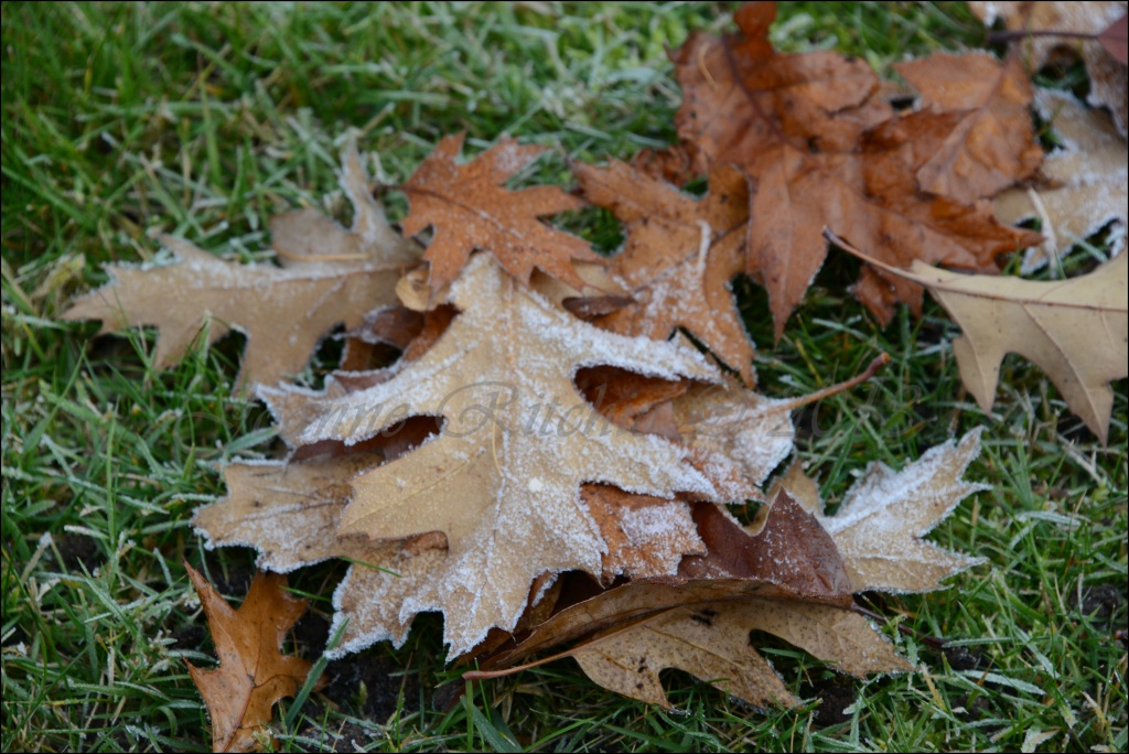 Frosting on Leaves