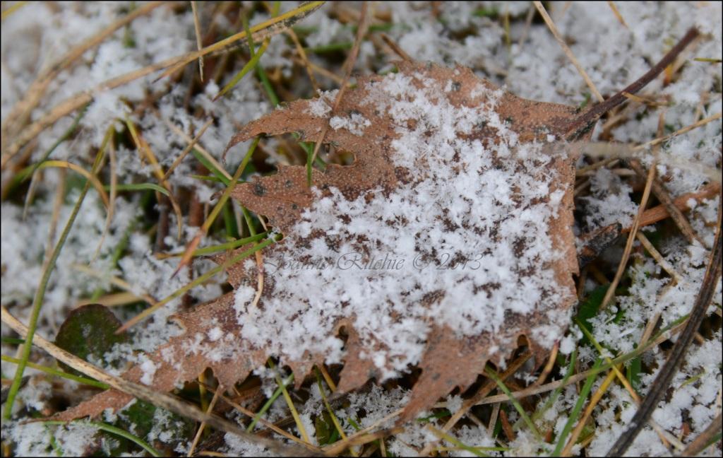 Frosty Leaf on a VERY Frosty Morning!