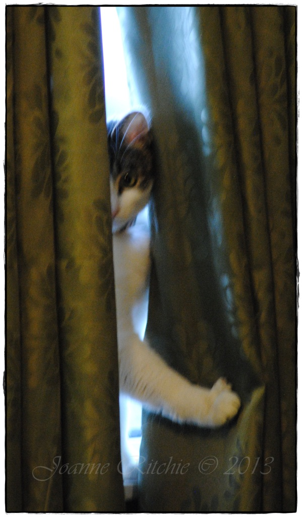 Peeping Cat - thank goodness she's all girl so there's no peeping Tom!