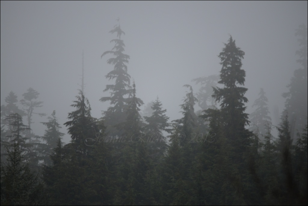 The Bewitching Mist creating the most magical silhouettes of the trees!
