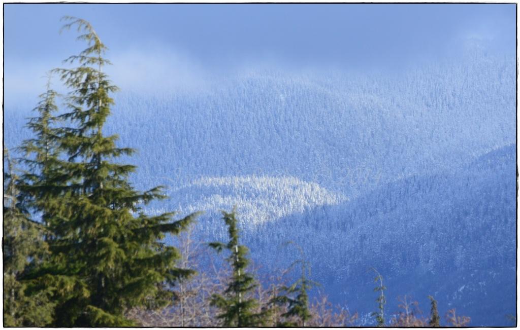 Spring Snow - simply glorious!