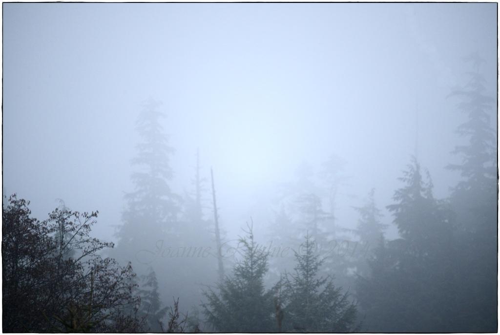 Misty Monday Morning - love it!