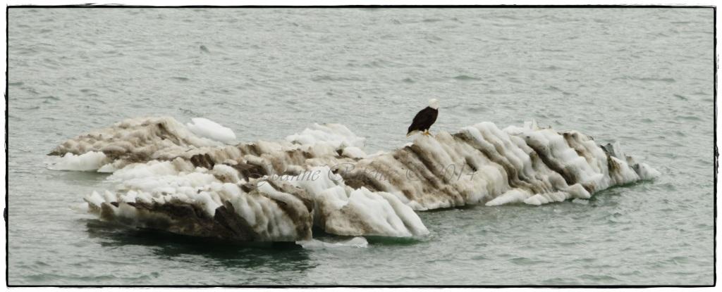 Iceberg Eagle!