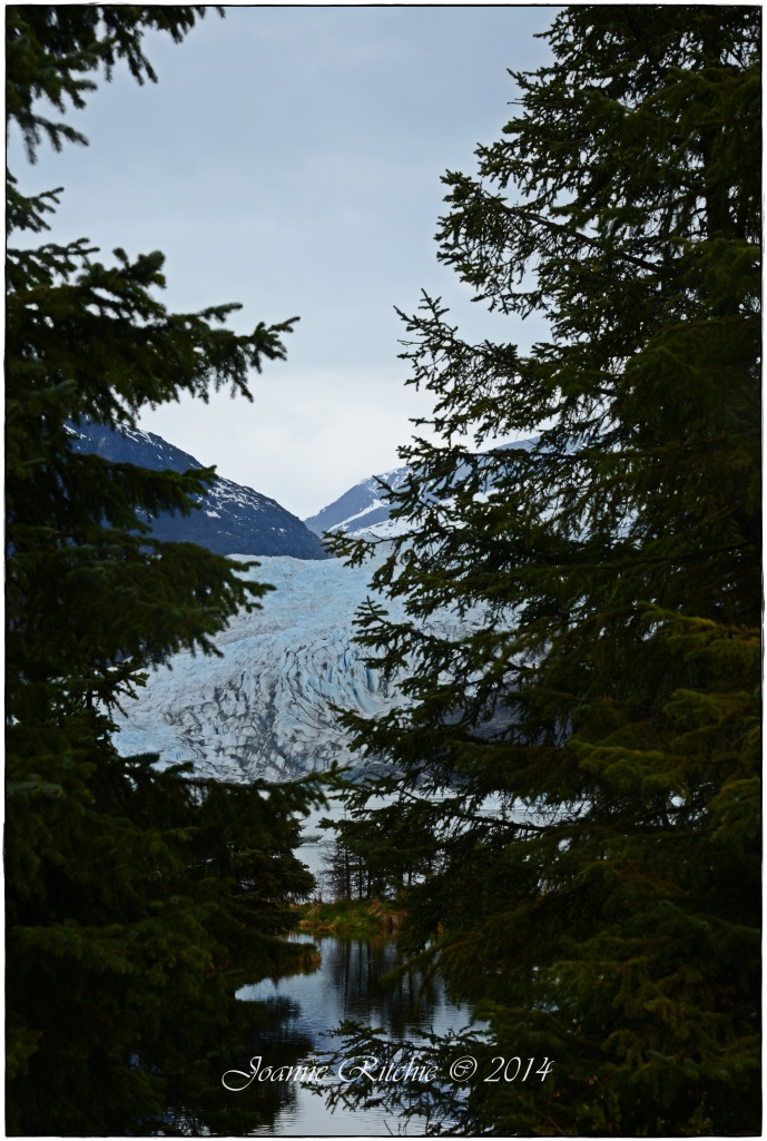 "Mendallhall Glacier through the trees for something ""artistic"", lol!"