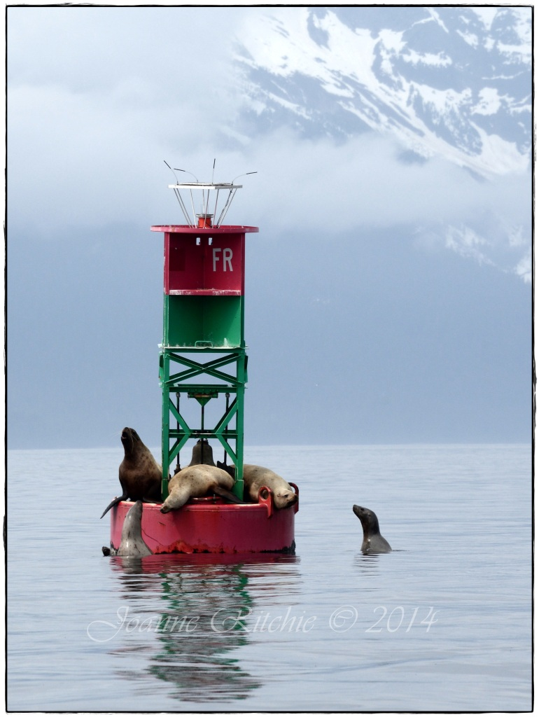 Sea Lions of Juneau unite!