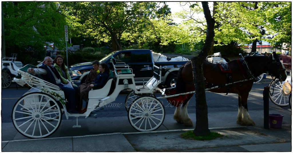Victorian Horse Drawn Carriage - the perfect way to end our day!