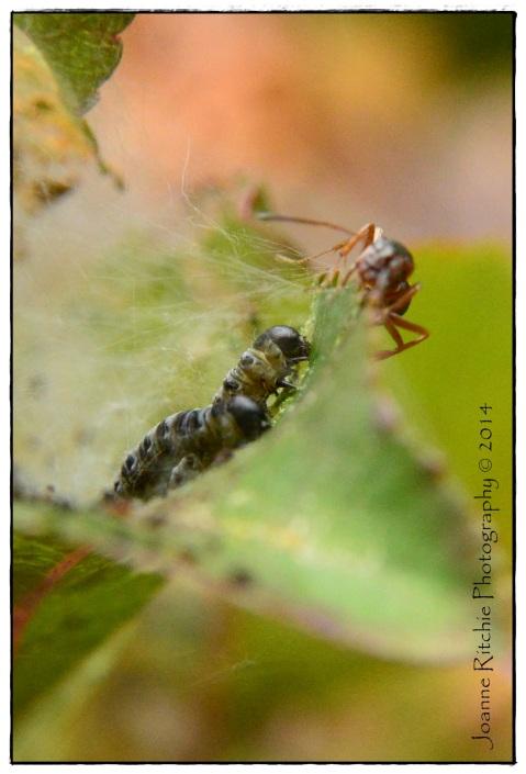 Grubs Vs Ant!